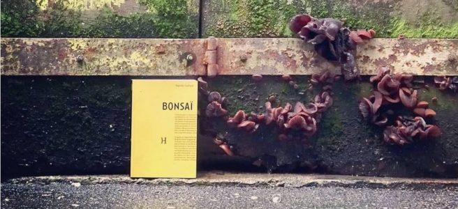 Baptiste Gaillard, Bonsaï, Hippocampe éditions, Lyons